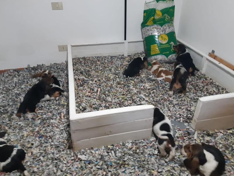 Lettiera in carta adatta a qualsiasi cucciolo